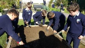 Planting Wheat 1 (1)_1024x576